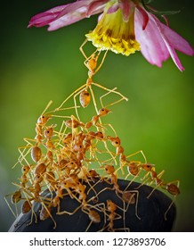 The World of Ants