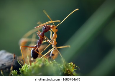 The World of Ants and Bug