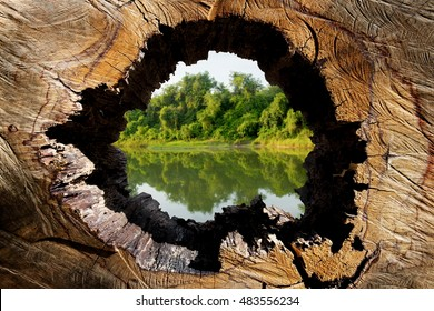 The World Conservation, Conservation, Water Conservation, global warming, holes wood, can be used as a background,Poster campaign against cutting trees, Earth Day, Protect the environment, advertise