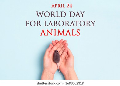 World Day for Laboratory Animals, 24 april. Female hands with a laboratory mouse on a blue background. World Day for Laboratory Animals, 24 april. Stop the cruelty. Stop animal testing