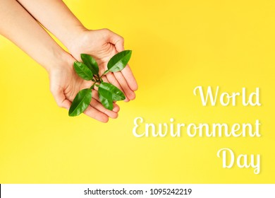 World Environment Day card. Female hands holding green plant on yellow background. Ecology concept. Place for text.