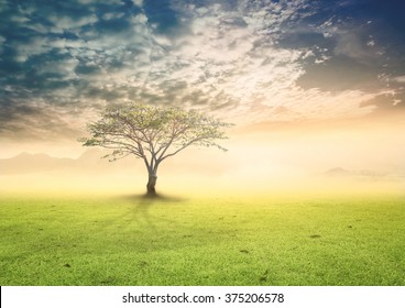 World environment day concept: Alone tree on meadow autumn sunrise background