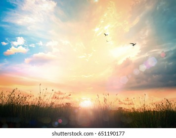 World environment day concept: Beauty meadow sunrise wallpaper background
