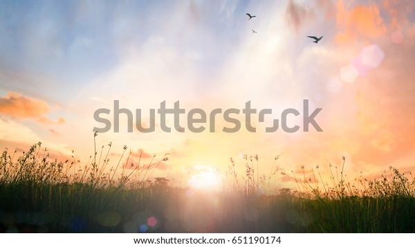 World environment day concept: Calm of country meadow sunrise landscape background