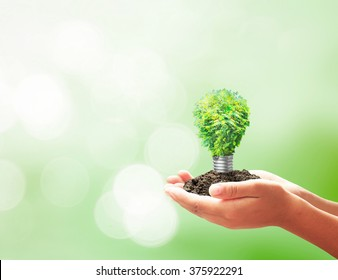 World environment day concept: Developer hand holding light bulb of growth tree on blurred green nature background