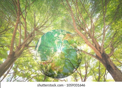 World environment day concept: Earth globe with brach of tree. Elements of this image furnished by NASA