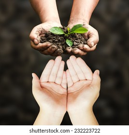 World environment day concept: Empty hands and dirty farmers hands holding small tree on black background