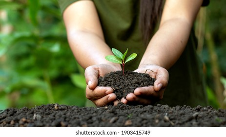 World environment day concept with girl holding small trees in both hands to plant in the ground.