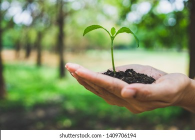 World Environment Day concept. Hand holding plant.
