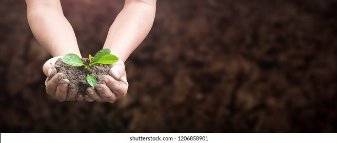 World environment day concept: Human hands holding seed tree with soil on blurred agriculture field background