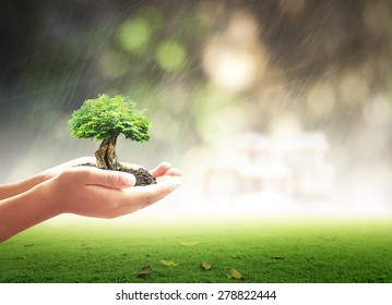 World environment day concept: Human handing big growth tree with raining over blurred house on blurred green nature background