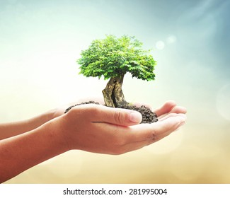 World environment day concept: Human hands holding big tree over blurred abstract beautiful green nature background