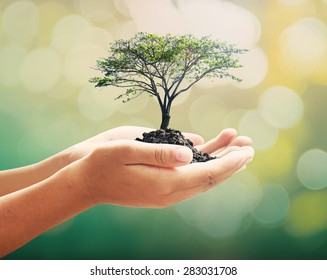 World environment day concept: Human hands holding big tree over nature background