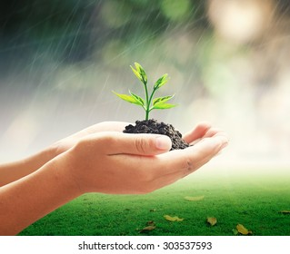 World environment day concept: Human hands holding small plant with soil over blurred rainy with green nature background