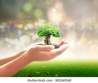 World environment day concept: Human hands holding big plant over blurred green forest background