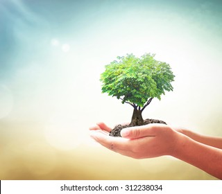 World environment day concept: Human hands holding fruitful tree in heart shape on blurred green nature sunset background