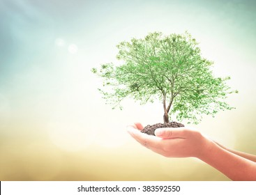 World environment day concept: Human hands holding growth tree over blurred nature sunrise background