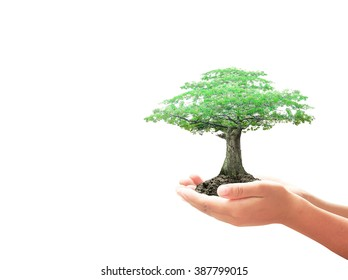World environment day concept: Human hand holding big tree isolated on white background.