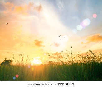 World environment day concept: Stunning yellow meadow autumn sunrise with bokeh light background
