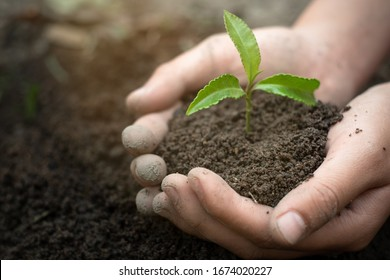 World environment day concept:The young woman is holding a small tree. Two hands holding a light green tree. holding seedlings isolate.