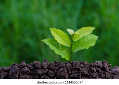 World Environment Day Planting seedlings young plant in the morning light on nature background