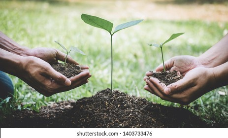 World environment day reforesting, Hands of young man helping were planting the seedlings and tree growing into soil while working in the garden as save the world, earth day and ecology concept.