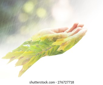 World environmental day concept: Double exposure of child open empty hands with palms up and branch of plant isolated on white background