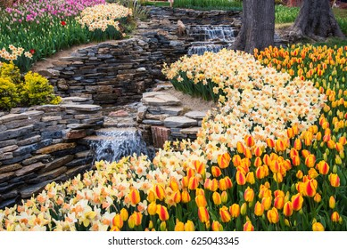 World famous Tulip Festival in Emirgan Park, Istanbul, Turkey. Flowering of tulips.