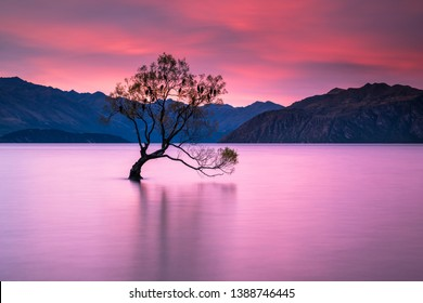 The world famous Wanaka tree at sunset during Autumn of 2016. This was taken during a 2 week intensive photography trip and this was the first day and sunset of the trip.