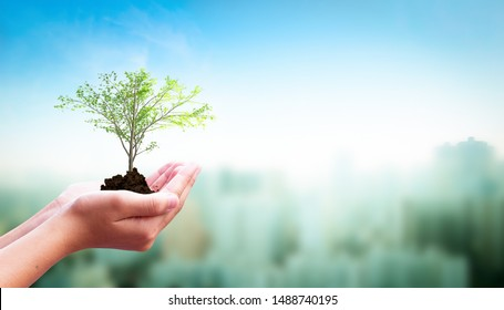 World Habitat Day concept: Human hand holding  tree over city  background
