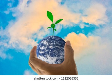 world in a handful of trees planted above with bright sky background, Abstract concept about global warming worldwide, Elements of this image furnished by NASA. (Photo manipulation)