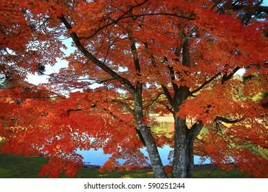 World Heritage hiraizumi leaves motsu-JI