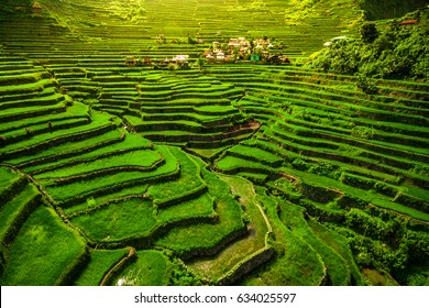 World heritage Ifugao rice terraces in Batad, northern Luzon, Philippines.