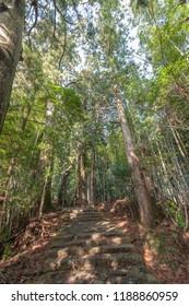 World Heritage: The Kumano Kodo