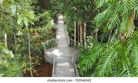 World Heritage rainforest skywalk at Mamau Australia