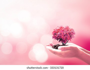 World kindness day concept: Human hands holding red heart of tree over blurred beautiful pink nature background