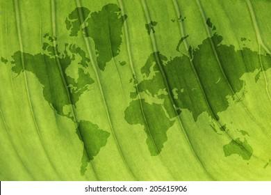 world map inside a leaf