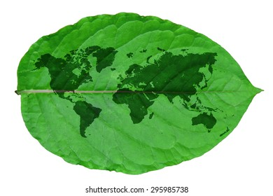 world map inside a organic leave. illustration design over white background. This has clipping path.