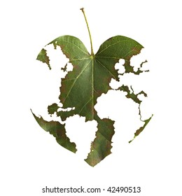 world map in a leaf