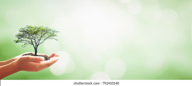 World mental health day concept: Human hands holding big growth plant over green forest background