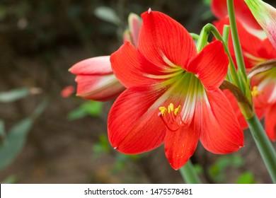 The World Most Beautiful Flora and Faunas of Bangladesh.