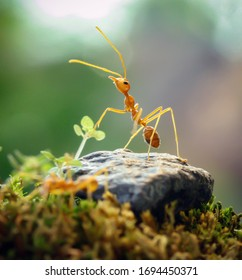 The World of Red Ant