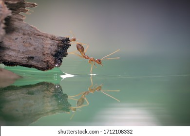 The World of Red Ants