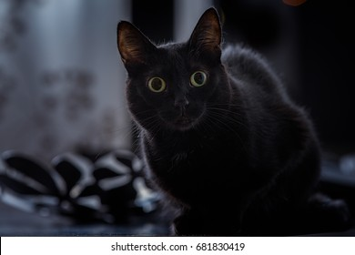 The world sentiment about black cats has been mixed. Black cat superstition has been a real phenomenon throughout history, and this has led to many misguided notions about them.