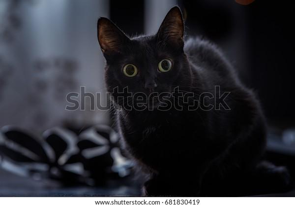 El sentimiento mundial sobre los gatos negros ha sido mixto. La superstición del gato negro ha sido un fenómeno real a lo largo de la historia, y esto ha llevado a muchas nociones equivocadas sobre ellos.
