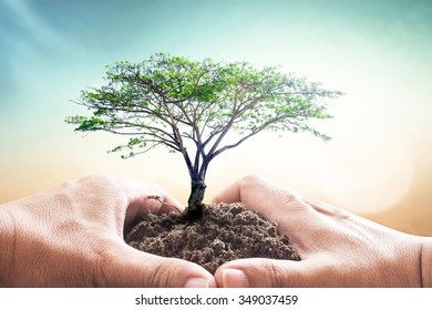 World soil day concept: Heart of hand holding big tree with soil on blur nature background