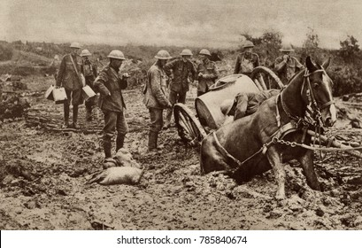 World War 1. British horse sunk to his haunches in the clinging mud of Flanders, during one of the five Battles of Ypres. This coastal region became a mud quagmire in each Fall. In 1914, 1917, and 191