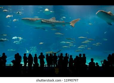 World's largest acrylic aquarium tank