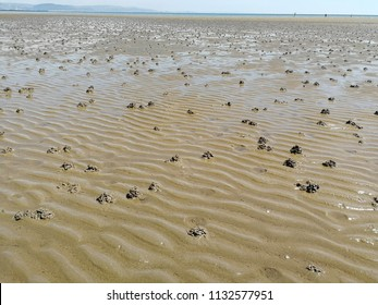 Worm casts on a wet rippled sandy beach.