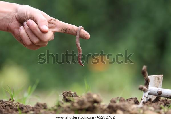 Un gusano en el jardín